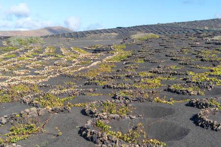 La Geria, Lanzarote Island, Canary, Spain, Vineyards in dark lava soil