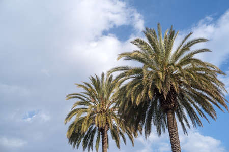Palm trees against cloudy sky Imagens