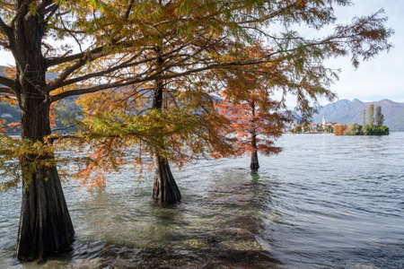 Trees in flooded water in Lake Maggiore after heavy rains, Northern Italy