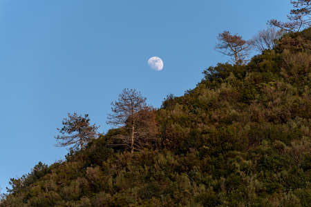 The moon rises, in the foreground trees on a hill