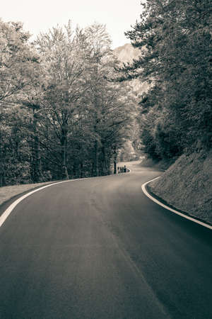 Empty road through mountains and woods over the Italian Alps