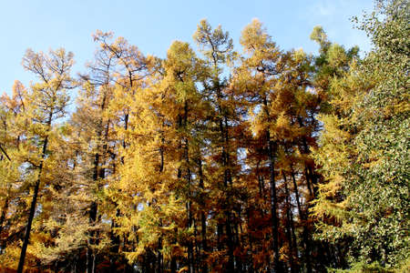 crohn: Yellowing trees in the Park