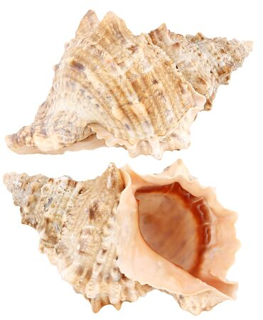 Sea shell isolated on white  photo
