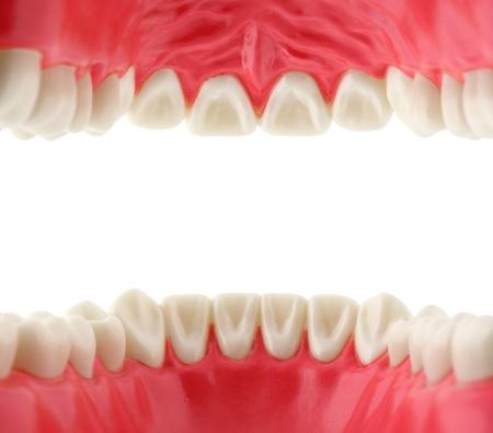 boca abierta: la boca con los dientes desde el interior