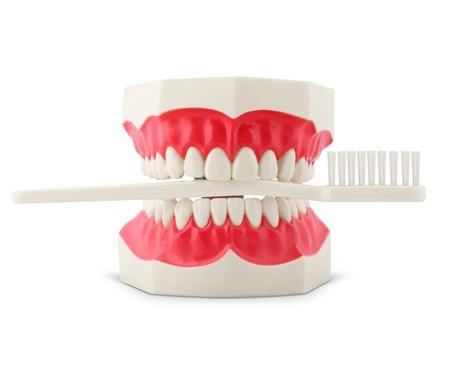 Modello denti con lo spazzolino isolato su bianco