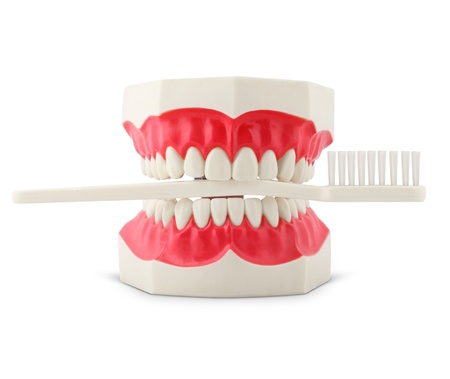 Teeth model with toothbrush isolated on white