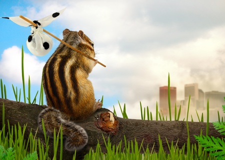 chipmunk emigrant, environment and ecology concept Stock Photo - 14529568