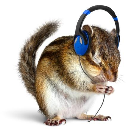 Funny chipmunk luisteren naar muziek op een koptelefoon, geïsoleerd op wit