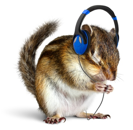 Funny chipmunk listening to music on headphones, isolated on white