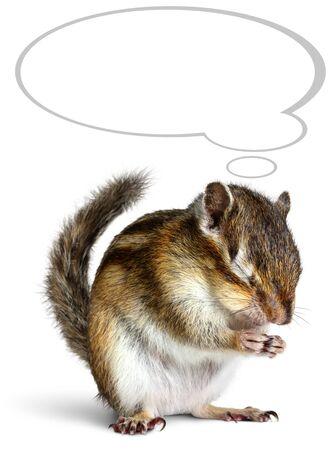 ardilla: Mascota divertida soñando con la burbuja de pensamiento, aislados en blanco