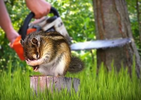 wild scared chipmunk and deforestation on background, nature destruction concept