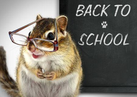 teaching crayons: Chipmunk divertente in occhiali, torna al concetto di scuola Archivio Fotografico