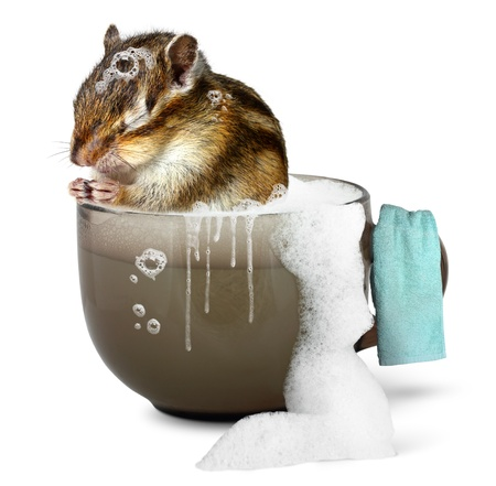 Funny chipmunk taking a bath, bathroom concept