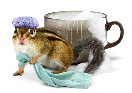 Funny chipmunk taking a bath in cup