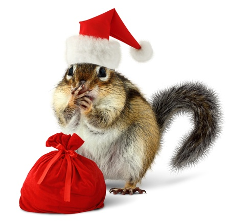 funny animal: Chipmunk in red Santa Claus hat and bag with gifts on white background
