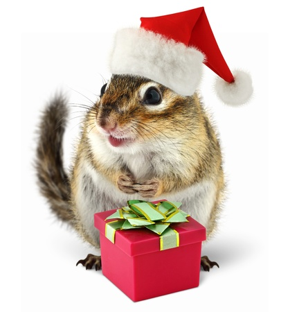 squirrel isolated: Chipmunk in red Santa Claus hat with gift box on white background