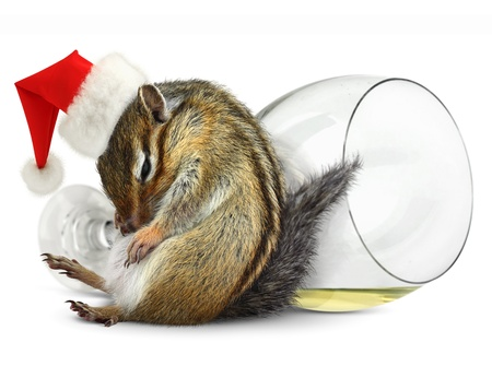 Funny drunk chipmunk dress santa hat with champagne glass on background