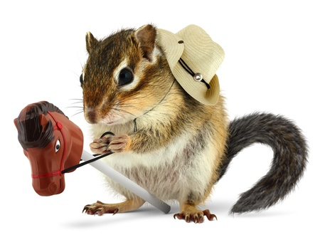 chipmunk: Funny chipmunk cowboy with stick horse on white