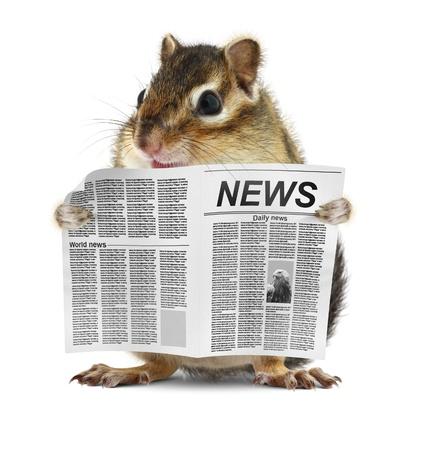 Grappig chipmunk gelezen krant, nieuws begrip