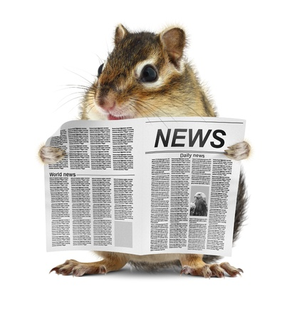 Funny chipmunk read newspaper, news concept