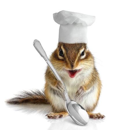 ardilla: Cocinero divertido ardilla en blanco