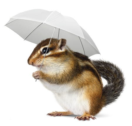 forecaster: Funny chipmunk with umbrella on white, weather concept