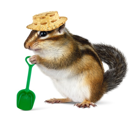 ardilla: Ardilla divertida con sombrero de paja y una pala, el concepto de agricultor Foto de archivo