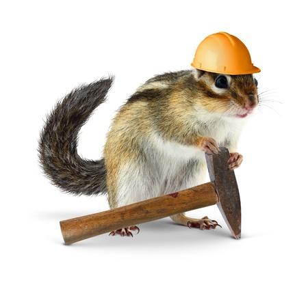 chipmunk: Funny chipmunk builder, reconstruction worker concept Stock Photo