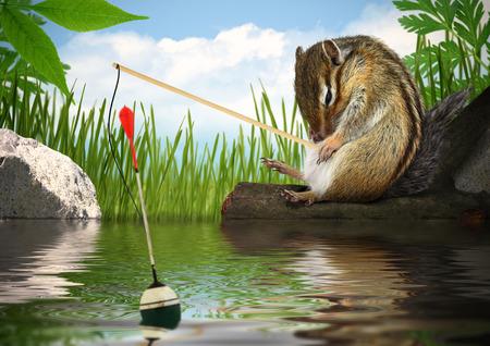 chipmunk: Pesca ardilla divertida con la ca�a de pescar, el concepto pescador