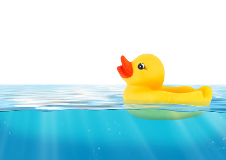 squeaky clean: Rubber duck swimming in blue water