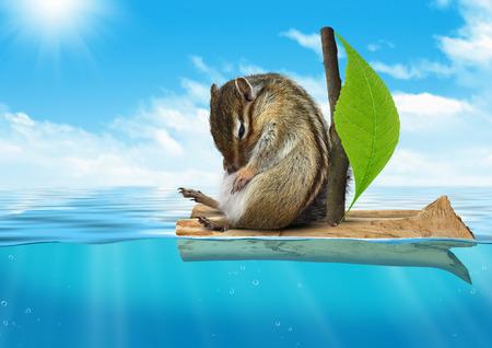 voyage: Funny animal, chipmunk floating at sea, voyage concept