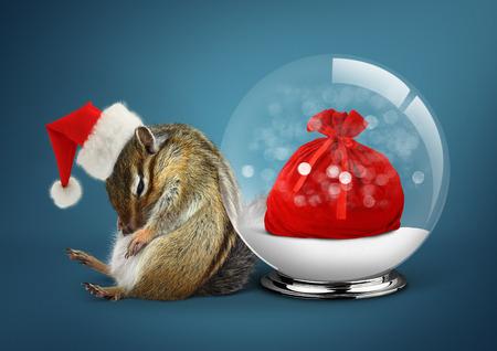 funny animal: Funny animal chipmunk dressed as santa with snow ball, christmas concept