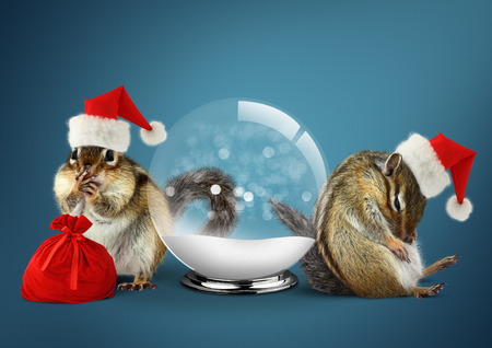 Funny animals chipmunks dress santa hat with snow ball, christmas concept