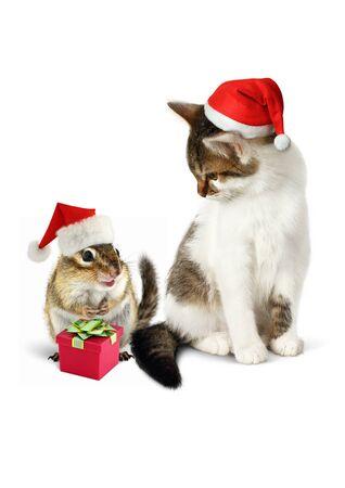 chipmunk: Comic xmas pet, funny chipmunk and cat dressed santa hat Foto de archivo
