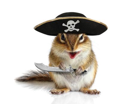 sombrero pirata: Pirata animal divertido, ardilla con el sombrero y el sable en blanco