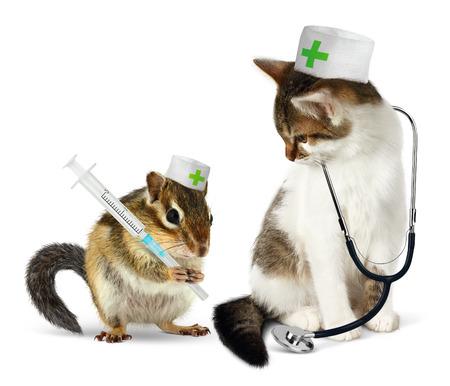 Veterinaire concept, grappige aardeekhoorn en kat met phonendoscope en spuit op wit