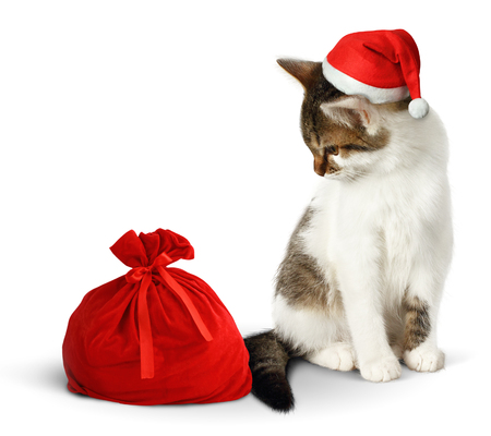 laughable: Funny cat with santa hat and sack