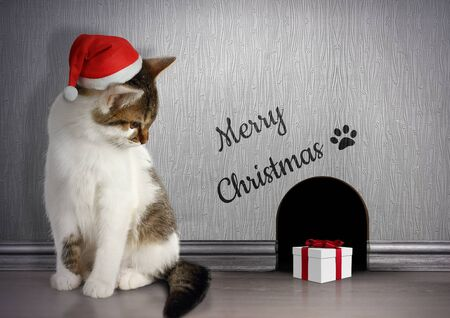 laughable: Xmas congratulate concept, cat with santa hat and gift