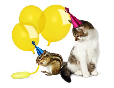 ardilla: concepto cumplea�os, divertido gato y ardilla con los globos en blanco Foto de archivo