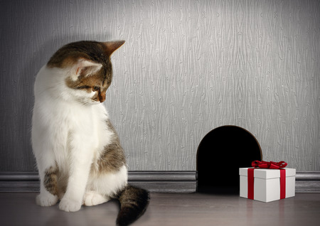 trickery: trap concept, cat with gift near a mouse hole