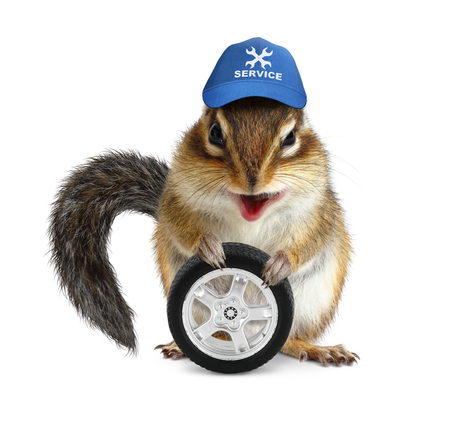 laughable: Funny craftsman chipmunk with auto wheel on white