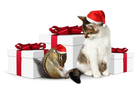 ludicrous: Comic xmas pet, funny squirrel and cat dressed santa hat Stock Photo