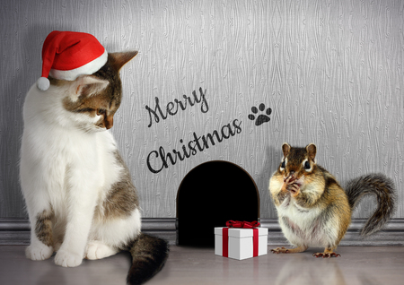 laughable: Christmas congratulate concept, Funny cat dressed santa hat and gift