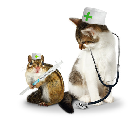 laughable: Vet concept, funny doctor chipmunk  and cat with phonendoscope and syringe on white Stock Photo