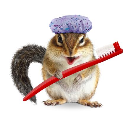 birretes: ardilla divertida con el cepillo de dientes y gorro de ducha, en blanco Foto de archivo