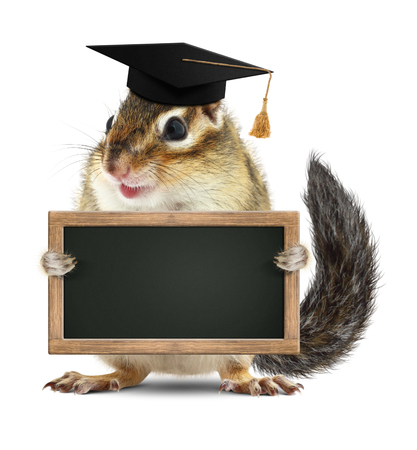 laughable: Funny chipmunk graduate hold blank blackboard, on white