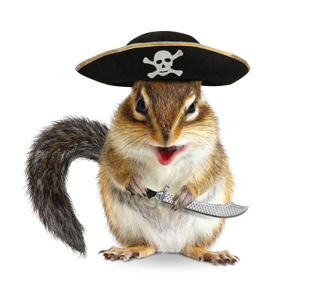ardilla listada: Pirata animal divertido, ardilla con el sombrero y el sable Foto de archivo
