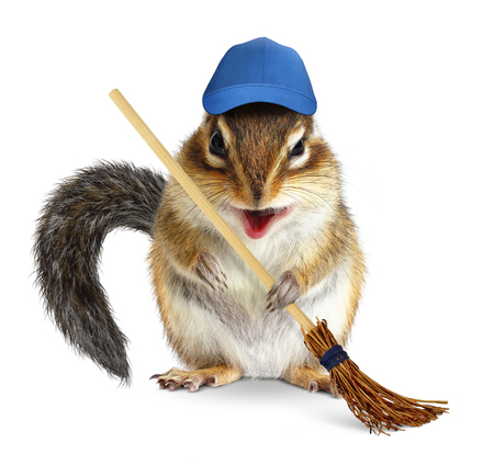 laughable: Funny chipmunk with broom, cleaning concept on white