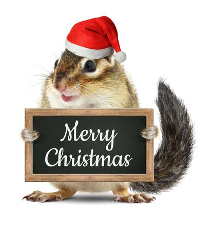 ludicrous: Funny santa claus, squirrel hold blackboard with merry christmas wish Stock Photo