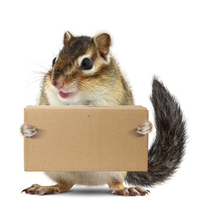 funny animal: Funny animal chipmunk hold box, delivery concept on white Stock Photo